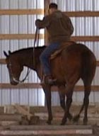 How To Move And Control All 4 Corners Of Your Horse