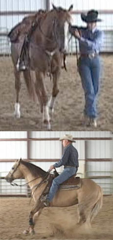 How To Teach Your Horse Reining