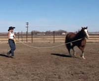 Sue Robertson Lunging