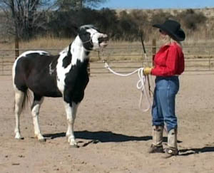Sue teaching a horse to smile or laugh!